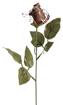 Obrázok z Čokoládová červená ruža 1 ks